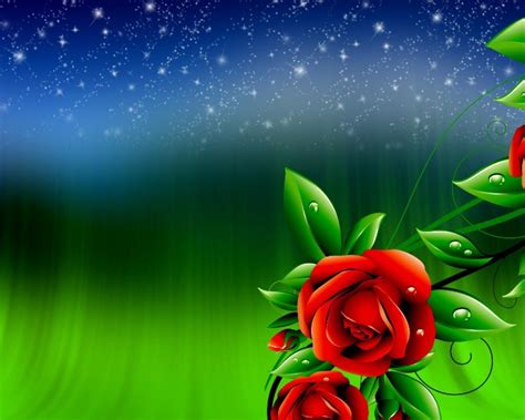 red roses  green leaves  drops  water sky