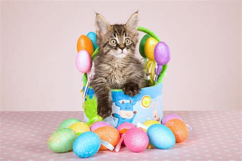 cat easter wallpaper cat easter eggs aol image search results