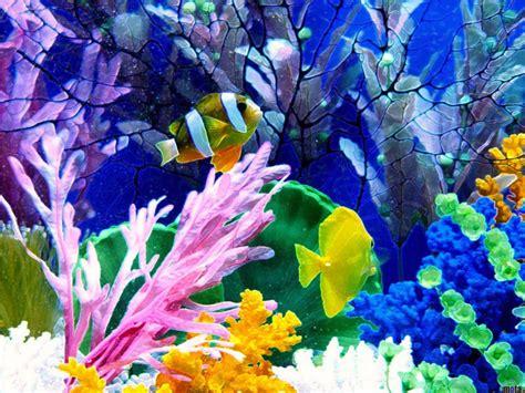 wallpaper keindahan alam bawah laut wallpaper pemandangan bawah laut 1000 fakta unik dan menarik