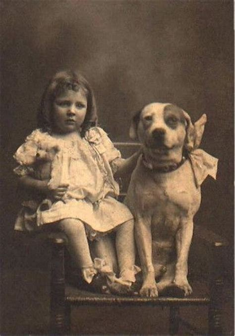 nanny dogs pit bulls were once known as quot nanny dogs quot because of how and protective they were