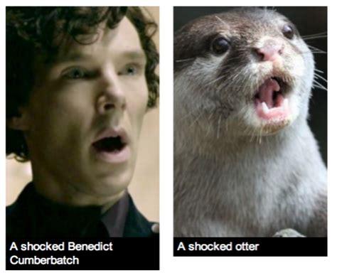 Cumberbatch Otter Meme - so we all know that benedict cumberbatch sherlock is an otter and that martin freeman john