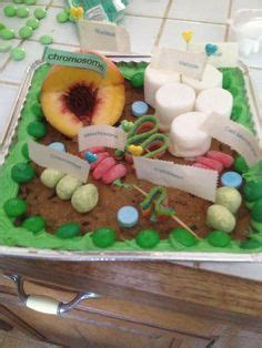 3d project 1000 images about school project ideas on plant cell animal cell and animal cell