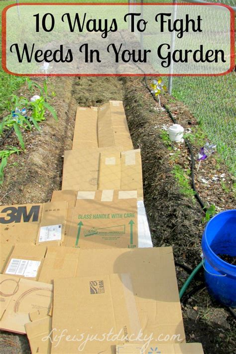 how to prevent weeds in vegetable garden 20 insanely genius gardening hacks for beginners finest
