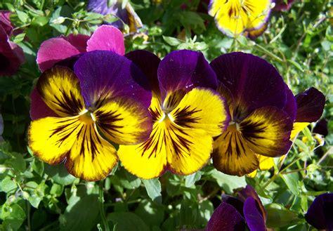 fiore botanica immagini fiore petalo primavera botanica flora