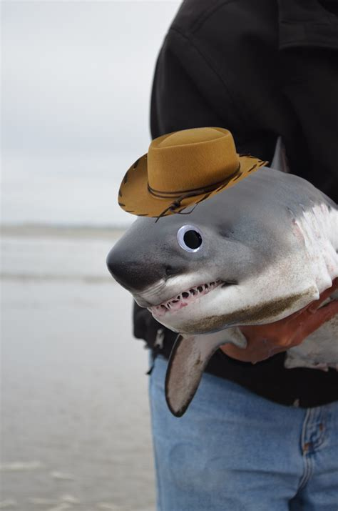 baby shark real drum baby shark aww