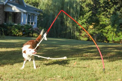 backyard dog toys tether tug dog toy w knotted rope pull toy