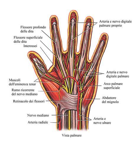dolore lato interno ginocchio tendinite ai flessori della mano e polso a sinistra o