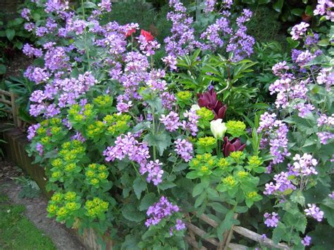 Perennial Garden Flowers Cottage Garden Flowers