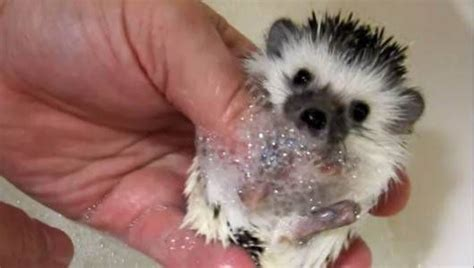 8 Most Adorable Animal by 8 Adorable Of Baby Animals Taking Baths Mnn