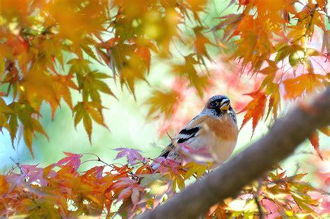 bird   fly   earth seeking