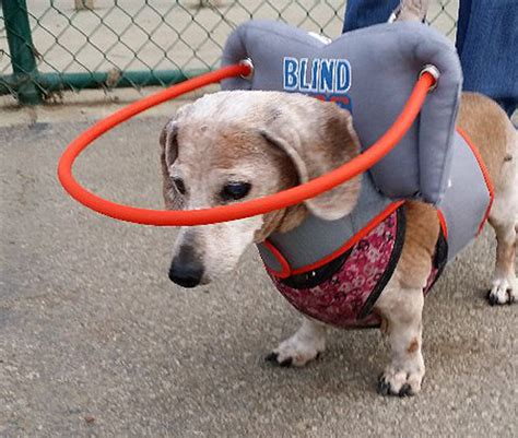 blind dogs muffin s my blind halo blind protection blind help