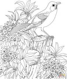 printable coloring pages birds and flowers american robin and mountain laurel connecticut state bird