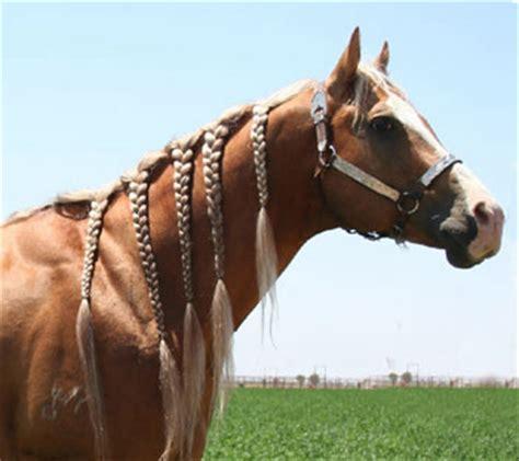 barrel racing horse hair braids potter ranch quarter horses