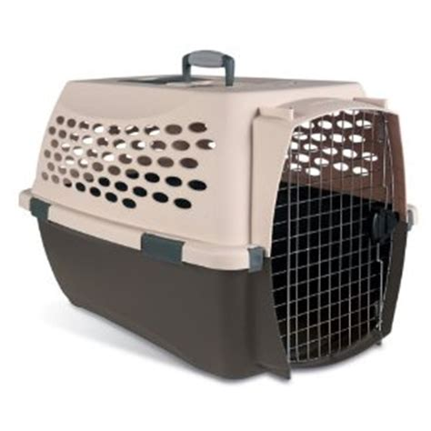 puppy in crate overnight crate your puppy aussiedoodle and labradoodle puppies best labradoodle