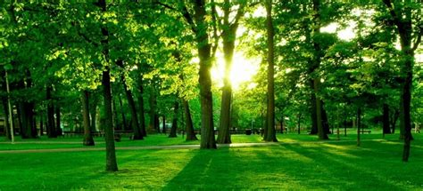 wallpaper for green environment thegreenestdoctor the best place for sustainable medical