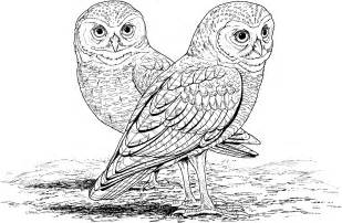 owl colors free printable owl coloring pages for