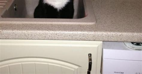 bed sinks in middle man wakes up in middle of the night to find strange cat in
