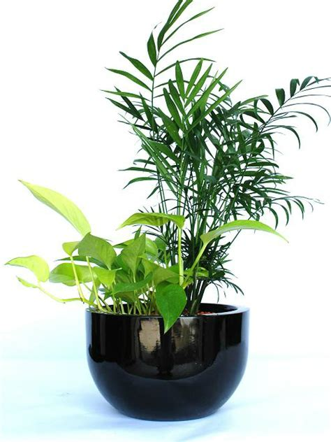 desk plants desk plant 01 mix foliage inscape indoor plant hire