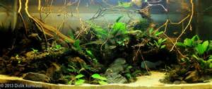 Biotope Aquascape by 2013 Aga Aquascaping Contest Entry 478