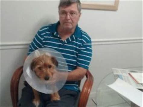 yorkie breeders in brevard county who hurt jasper nab burglar for stealing and stabbing yorkie pet rescue