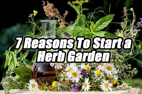 7 Reasons To Start A by 7 Reasons To Start A Herb Garden