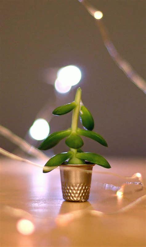the world s smallest christmas tree handmade charlotte