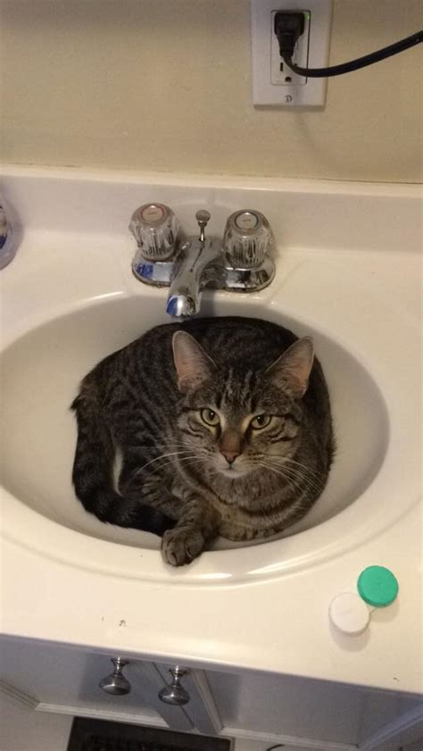 cat in sink cat in sink catsinsinks