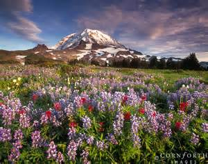 United States Of America National Flower - redefining the face of beauty top 10 things to do in