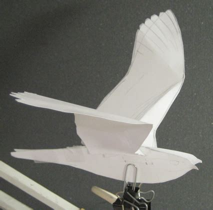 How To Make 3d Birds From Paper - drawing birds from paper models drawing the motmot