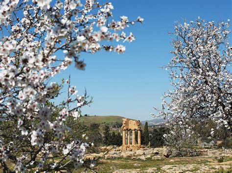 agrigento mandorlo in fiore comune della sicilia agrigento typical sicily