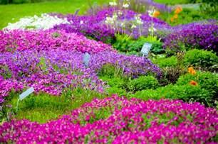 Flowers In Gardens Garden Of Flowers By Kayellaneza On Deviantart