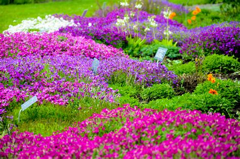 Flowering Garden Plants Garden Of Flowers By Kayellaneza On Deviantart