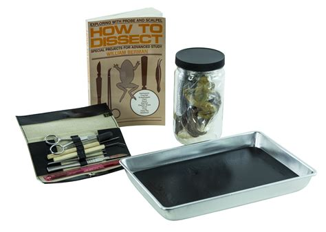 earthworm dissection kit dissection kit for matttroy
