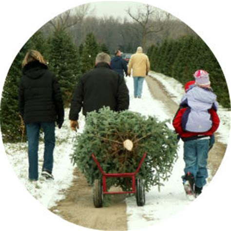 piper mountain christmas tree farm for sale local choose your own tree farms bangor me