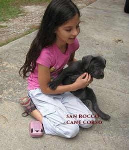 can i take my puppy outside before vaccinations when should you take your puppy outside san corso puppies for sale
