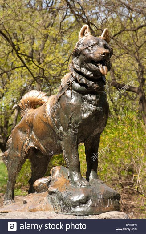 where to buy puppies in nyc sled statue balto in central park nyc stock photo royalty free image 30283221
