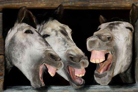 foto la delle risate foto animali la fattoria delle risate lettera43 it