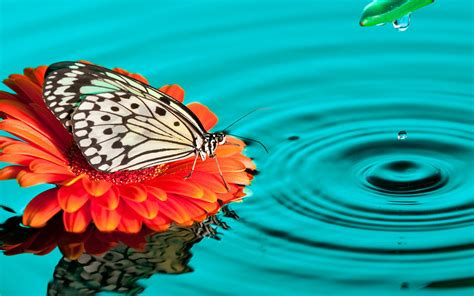 butterfly on a flower in water wallpapers and images