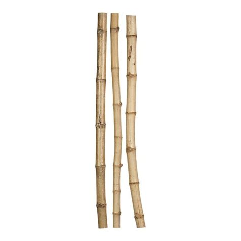 Vase Bamboo Sticks by Discover And Save Creative Ideas