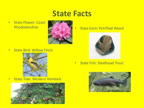 washington state bird facts washington state report jalen