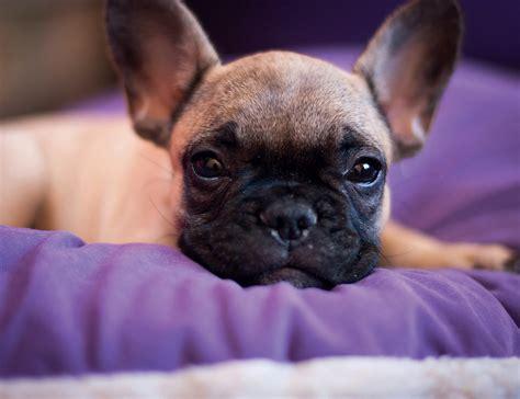 cani piccola taglia da appartamento adottare un indecisione fra taglia piccola media o