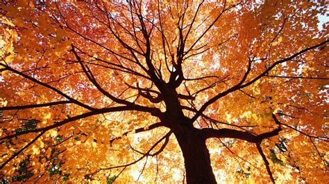 autumn autumn photo 35926505 fanpop