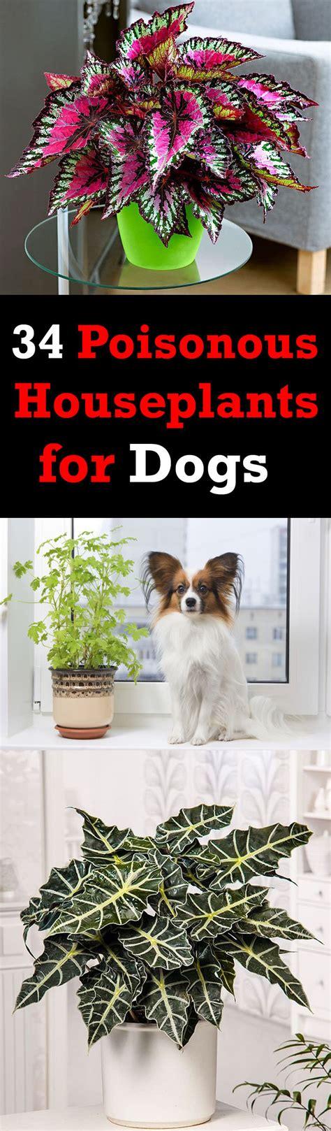 poisonous houseplants  dogs plants toxic  dogs