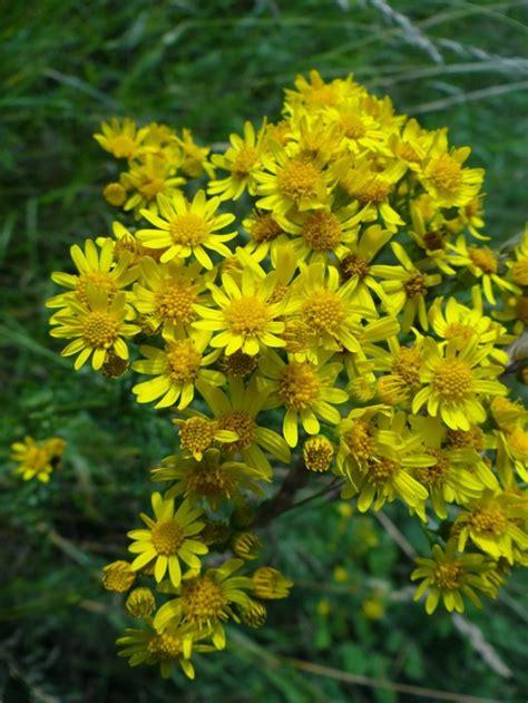 bloemen herkennen aan blad wilde bloemen bloemen planten natureglosscloseup