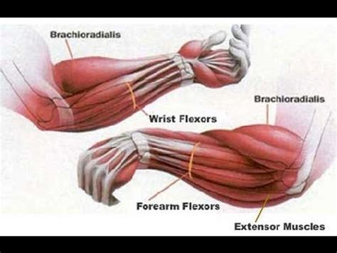 your wrists to your arms and now to your hair scuncis hair avant bras musculation 224 la maison youtube