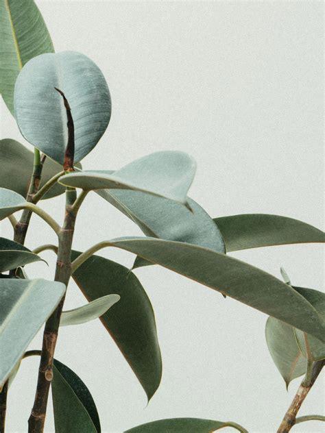 identify indoor tropical plants large leaf modern house