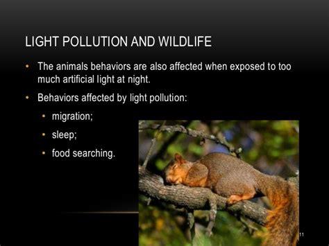 Animal Effects Dan Light light pollution
