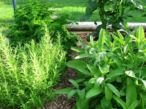 planting an herb garden culinary herb gardens how to create an edible herb garden