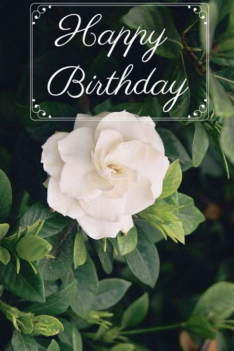 Gardenia Quotes 30 Birthday Wishes Ecards To Post And Pin 30