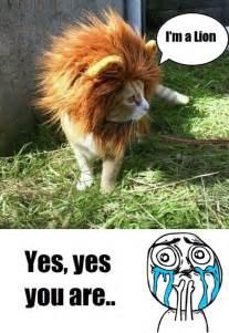 Cute Overload Meme - image 248000 cuteness overload know your meme